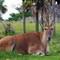 Antelope_MG_9796