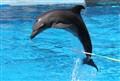 Dolphin @ uShaka