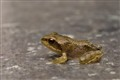 Tiny frog on the go. (ISO 6400)