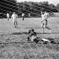 Goal nets sample