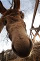 This donkey says 'hi' ;)