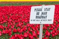 Keep off the tulips!