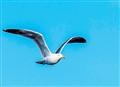 free as a bird...