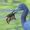 Heron: