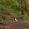 Will , Daresbury Forest
