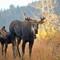 2018-10-03 Big Cottonwood Canyon 3585