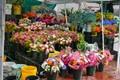 Cape Town Flower Seller