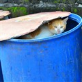 Cat In The Trash Can