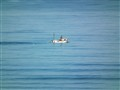 Lonely fisherman on a calm sea.