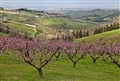 Early springtime in Romagna hills