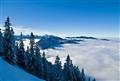 Alpine Fogg