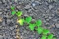 Watermelon & Soil