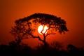 Lion King Sunset
