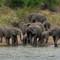 Kruger Nat Park SAf 12-11-06 (111)-1