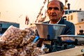 Peanut in Istanbul