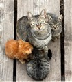 mom_kittens