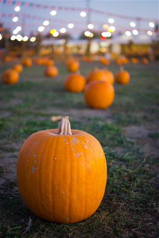 pumpkin patch-065