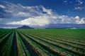 Irrigated Field