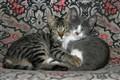 posing Cats