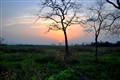 kaziranga_sunset2