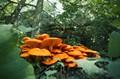 Some Kind of Mushroom