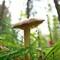 Spider's tiny mushroom home