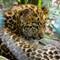 Jax-Zoo-BabyCat-ISO-1600