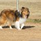 2014-02-01 Dogpark (33 of 61)