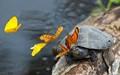 Butterfly Bullies