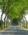 A typical country road in the Loire Valley, France.
