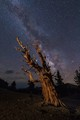Milky Way Over Bristlecone Pine