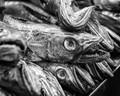 The famous fish market in Jerez de la frontera, Spain