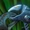 Channel lock dinosaurs engaged in mortal combat: OLYMPUS DIGITAL CAMERA