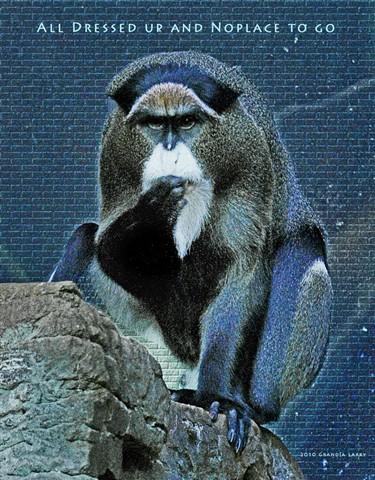 AYATOLLAH MONKEY (De Brazza's Monkey)