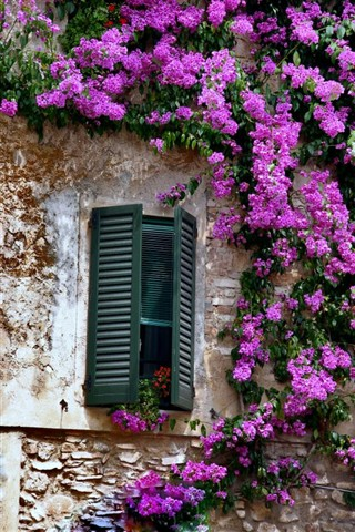 Window of Beauty