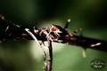 Ewww...A Bug!