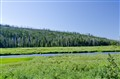 Grassy river