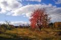 red treee