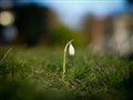 It´s spring