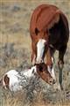 MustangSiblings_IMG_5923vabc
