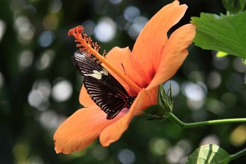 Butterfly_Mainau_Konstanz_070