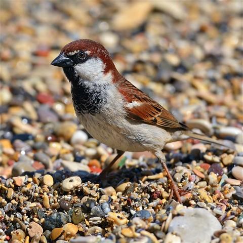 Sparrow5378