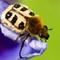 PIC15139-div-crop-DEF-canvas-nocancrop-hb-WEB