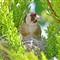 Bird nest_2153