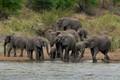 Elephant herd at Kruger National Park