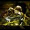 Frog Eyes challenge 6113684 jpg