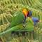Rainbow Mating