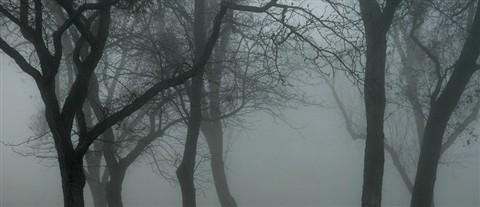 7826_FoggyPark02
