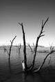 Sentinels of the lake