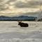 Moose at Hauser Lake3